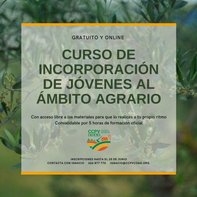 curso_online_11